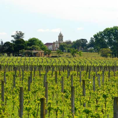 Uruguay cada vez más considerada como tierra vitivinícola.